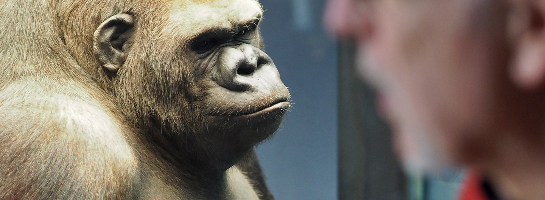 1440x530_slider_gorilla
